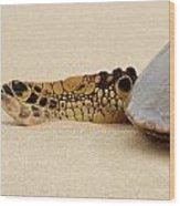 Hawaiian Green Turtle Rear Tail Fin Wood Print