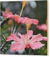 Hawaiian Pink Hibiscus Wood Print
