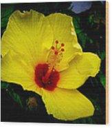 Hawaiian Yellow Hibiscus Wood Print