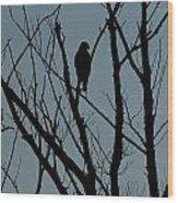 Hawk 4 Wood Print