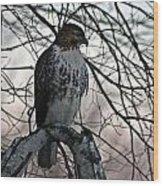 Hawk 6 Wood Print