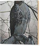 Hawk 7 Wood Print