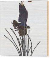 Hawk On Statue Wood Print by Rebecca Margraf