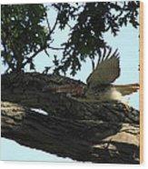 Hawk On The Move Wood Print
