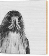 Hawk On White Background Wood Print