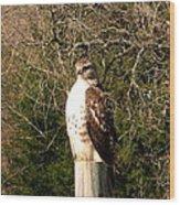 Hawk Post Wood Print