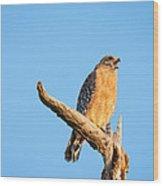 Hawk Screaming Wood Print