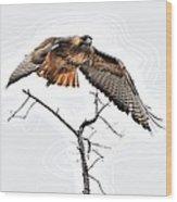 Hawk Taking Flight Wood Print