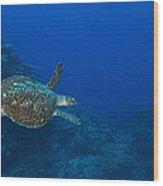 Hawksbill Sea Turtle, Kimbe Bay, Papua Wood Print