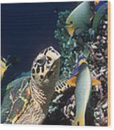 Hawksbill Turtle Feeding Wood Print