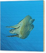 Hawksbill Turtle In The Diving Wood Print