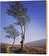 Hawthorn Trees In Sally Gap, County Wood Print