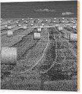 Hay Bales On A Farm In Alberta Wood Print