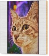 Haydar #cat #cats #tagsforlikes Wood Print