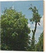 Hayrake In The Woods Wood Print