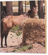 Hay's For Horses Wood Print