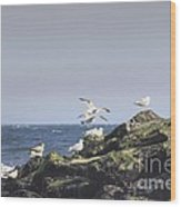 Hdr Seagulls At Play Wood Print by Pictures HDR