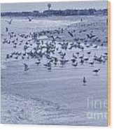 Hdr Seagulls At Play In The Sand Wood Print by Pictures HDR