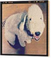 He Looks Like A Sheep! Lol 🐶 Wood Print by Nena Alvarez