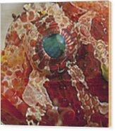 Head Detail Of A Red Dwarf Lionfish Wood Print