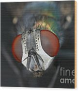 Head Of A Green Blow Fly Wood Print