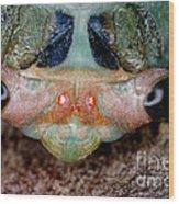 Head Of Cicada Wood Print