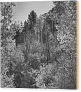 Heart Of The Aspen Forest Wood Print
