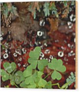 Heart Shaped Clover And  Dew Drops Wood Print