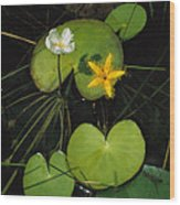 Heart-shaped Water Lily Wood Print