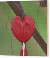 Heart To Heart Wood Print