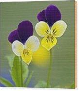 Heartsease (viola Tricolor) Wood Print