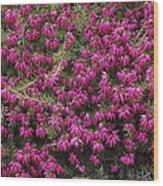 Heather 'nathalie' Flowers Wood Print