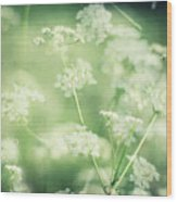 Hedgerow Blossom In Spring Wood Print