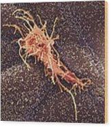 Hela Cell, Sem Wood Print