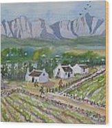 Helderberg Wine Estate Wood Print