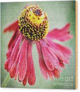 Helenium Flower 2 Wood Print
