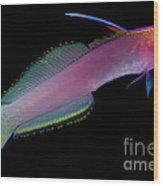 Helfreiky Firefish Wood Print