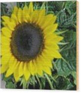 Helios Flower Wood Print