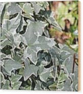 Helix Glacier Ivy Wood Print