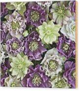 Hellebore Helleborus Sp Flowers Wood Print
