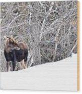Hello Moose Wood Print