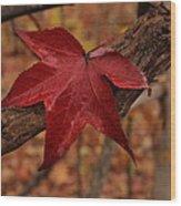 Hello Red Wood Print by Bob Whitt