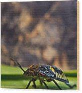 Hemiptera Nymph Walikng 1 Wood Print