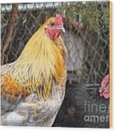 Hen Pecked Wood Print