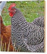 Hens Wood Print