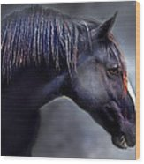 Hercules The Black Stallion Wood Print by Dorothy Walker
