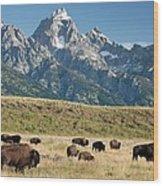 Herd Of American Bison Wood Print