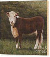 Hereford Heifer Wood Print