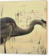 Heron Fishing Wood Print