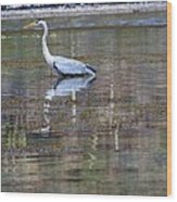Heron Fishing Wood Print